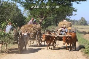 ミャンマー マグェ管区の牛車