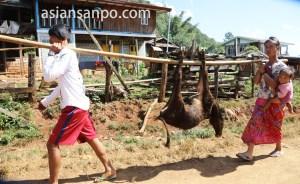 ミャンマー ロイコー 子牛
