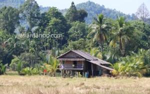 ミャンマー タニンダーリーダウェイ 農村