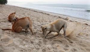 ミャンマー マウンマガンビーチ 犬