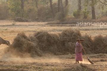 ミャンマー ガンゴー