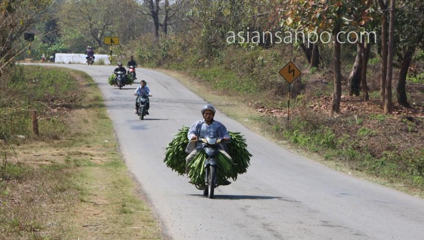 ミャンマー カレイミョーータム インド 友好道路 大豆