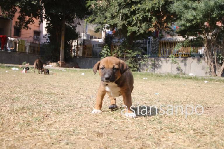 インド ニューデリー 犬
