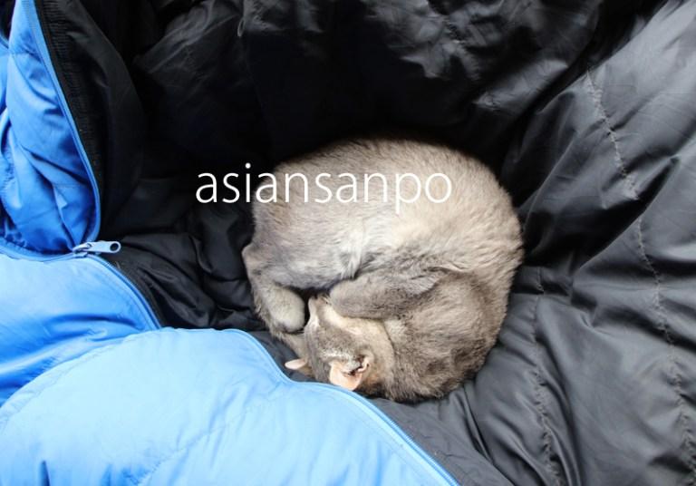 ネパール エベレスト街道 クンデ 子猫