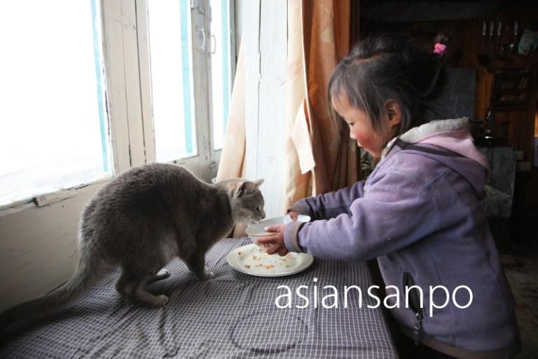 ネパール エベレスト街道 クンデ ツェリン 子猫