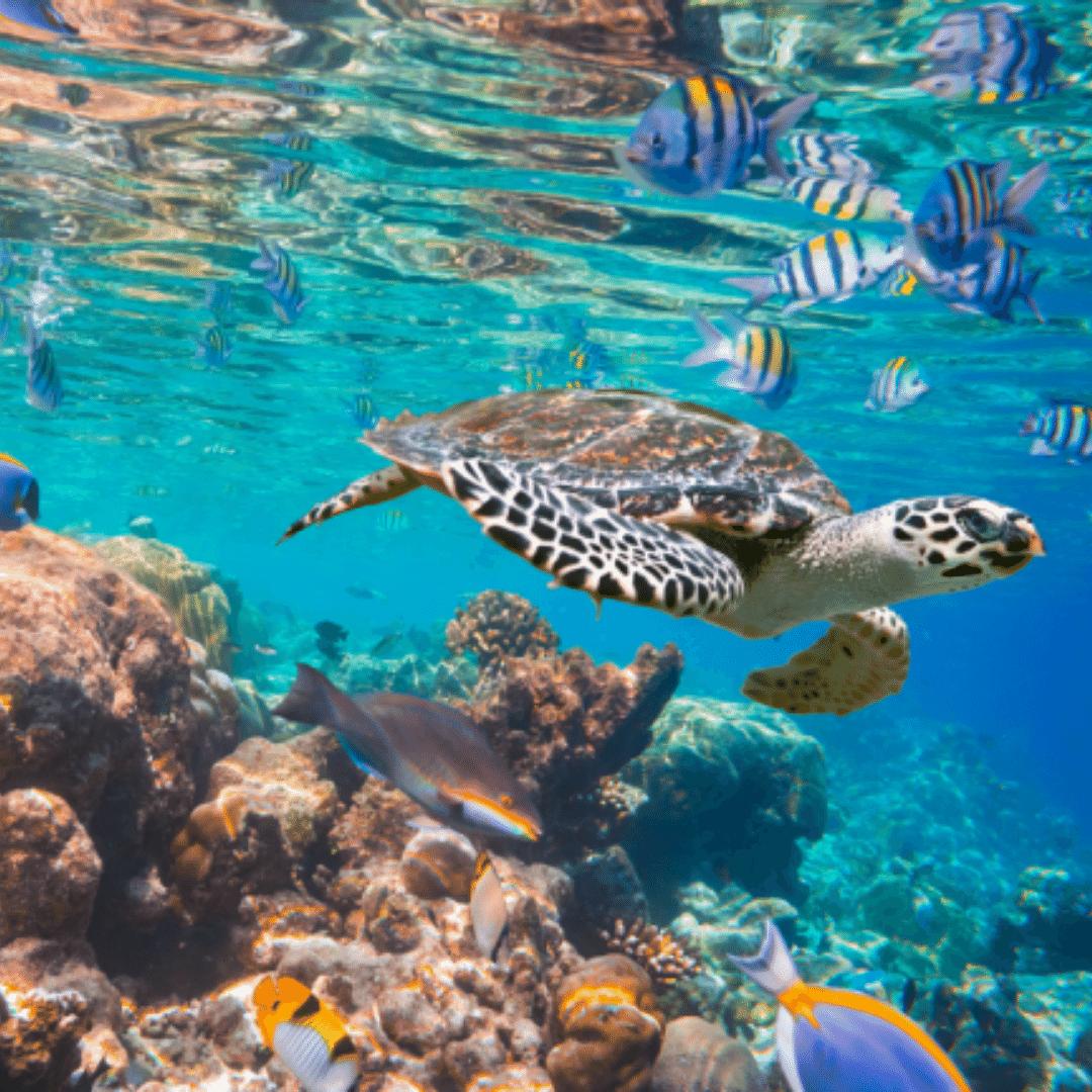 Read more about the article Dia Mundial dos Oceanos – Conheça as belezas naturais da Ásia