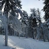 zimowy las, okolice Hali Lipowskiej