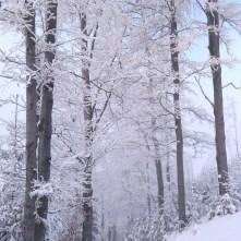 zima wBeskidach, szlak zHali Boraczej