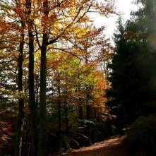 jesienny las, Beskid Zywiecki