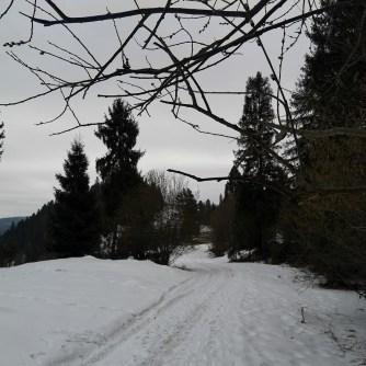 bazie, śnieg, niebieski szlak wPieninach