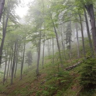 Rezerwat Żebracze, Beskid Sądecki