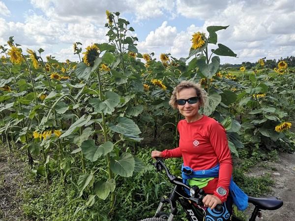 dziewczyna, pole, słoneczniki