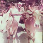Taiping_Kartar Kaur_Ranga Singh_bullock cart_1b