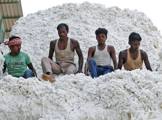 Workers push harvested cotton with their feet as they unload it from a supply truck at a cotton processing unit in Kadi, Gujarat state, India. Reuters