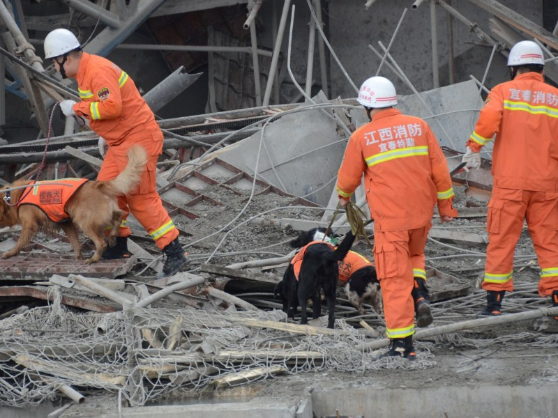 Rescue workers with sniffer dogs search at the site where a power plant's cooling tower under construction collapsed in Fengcheng, Jiangxi province, China, November 24, 2016. Photo: China Daily/via Reuters