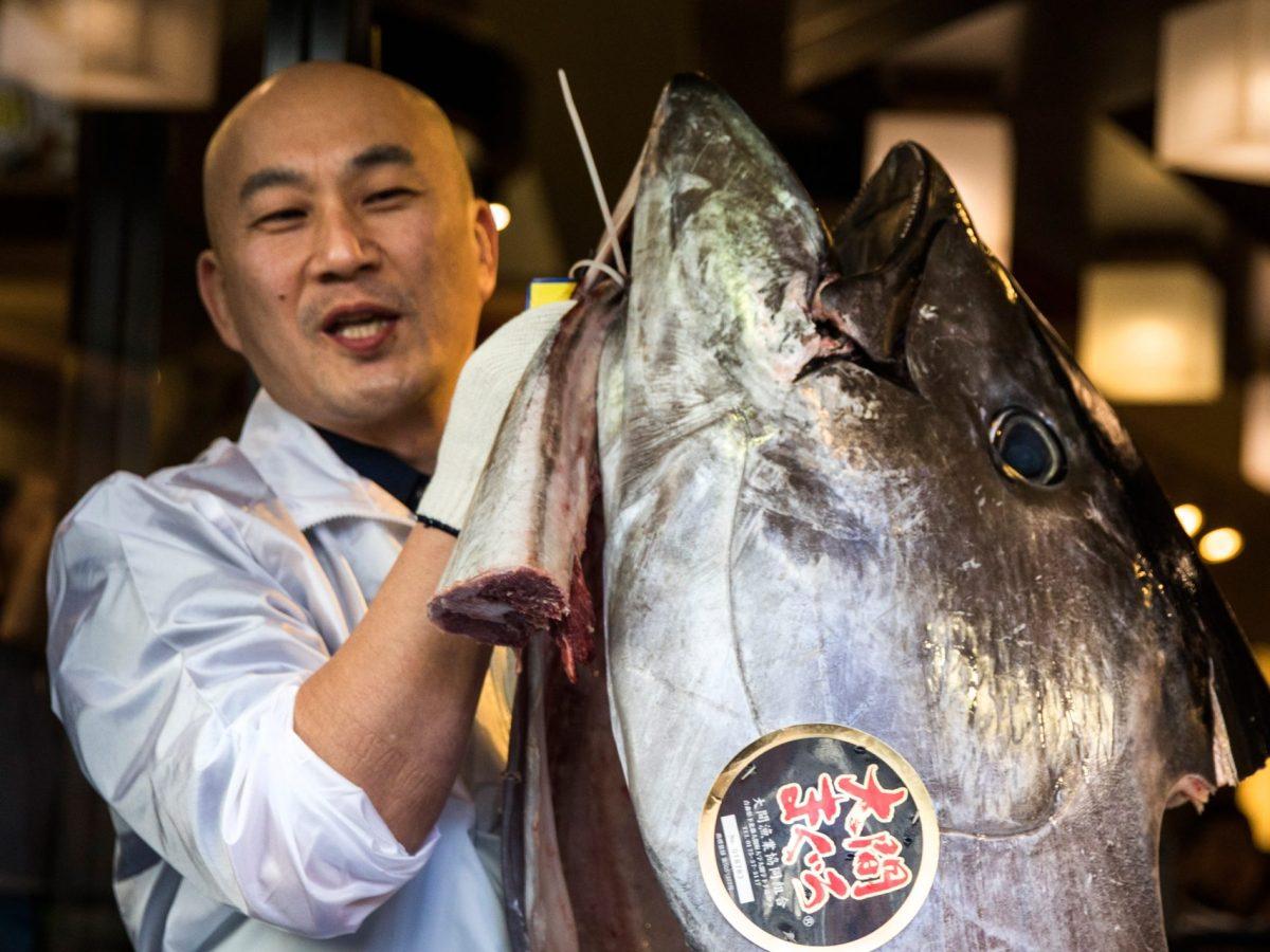 An employee of restaurant chain Sushi-Zanmai holds the head of a 212-kilogram bluefin tuna near the Tsukiji fish market in Tokyo on January 5, 2017. Photo: AFP/Behrouz Mehri
