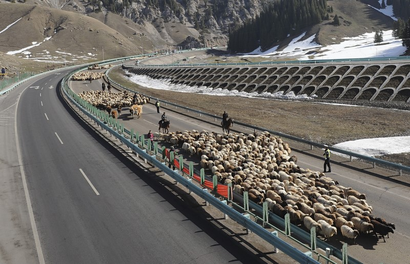 Shepherds lead their flock of sheep and cattle along on the Guozigou segment of the Lianyungang-Horgos expressway. Photo: Reuters