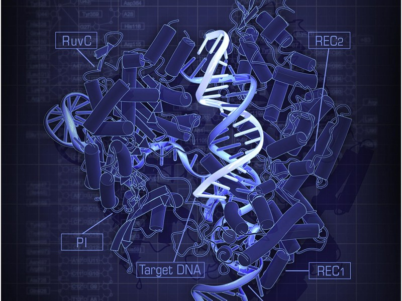 Crispr picture: Court ruling puts Zhang at the vanguard of the gene manipulation technology. Photo: Wikimedia Commons