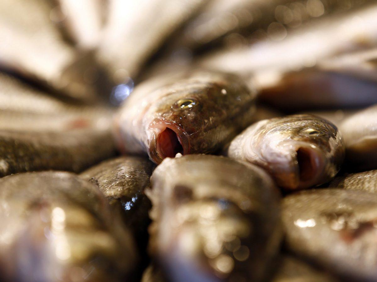 Fresh sea bass at Rialto Market in Venice. Photo:  Reuters/Stefano Rellandini