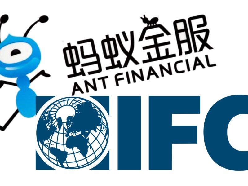 IFC Ant