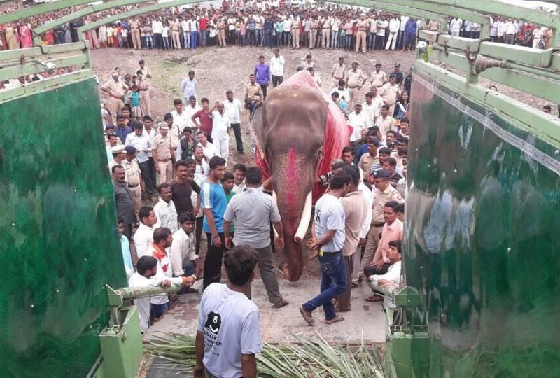 Gajraj enters the Wildlife SOS elephant ambulance. Photo: Hindustan Times