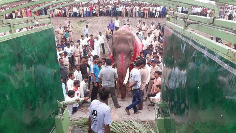 Gajraj enters the Wildlife SOS elephant ambulance. Photo: Hindustan Times