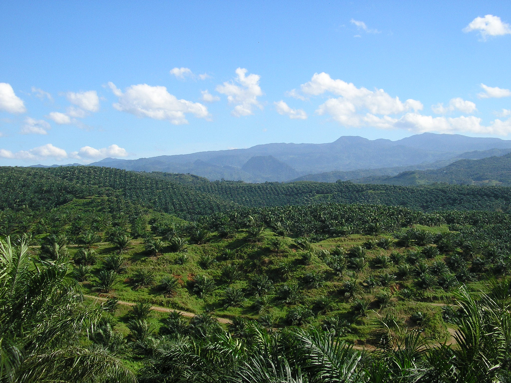 A palm oil plantation south of Jakarta on the Indonesian island of Java. Photo: Wikimedia Commons, licensed under CC BY 2.0.