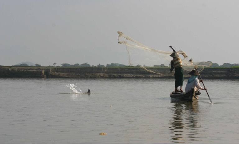 Fishermen in the Irrawaddy River have been fishing cooperatively with dolphins for generations. Photo: Alex Diment