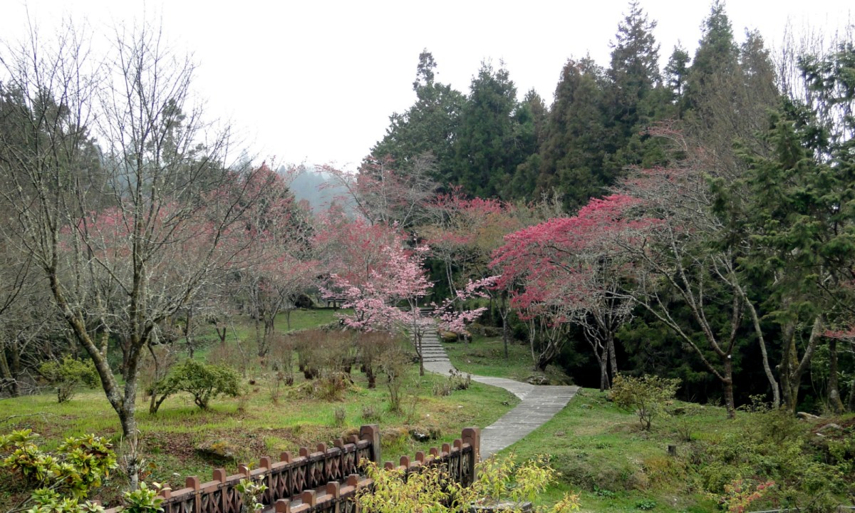 Alishan Forest Park in Chiayi County, Taiwan. Photo: Wikimedia Commons / Bernard Gagnon