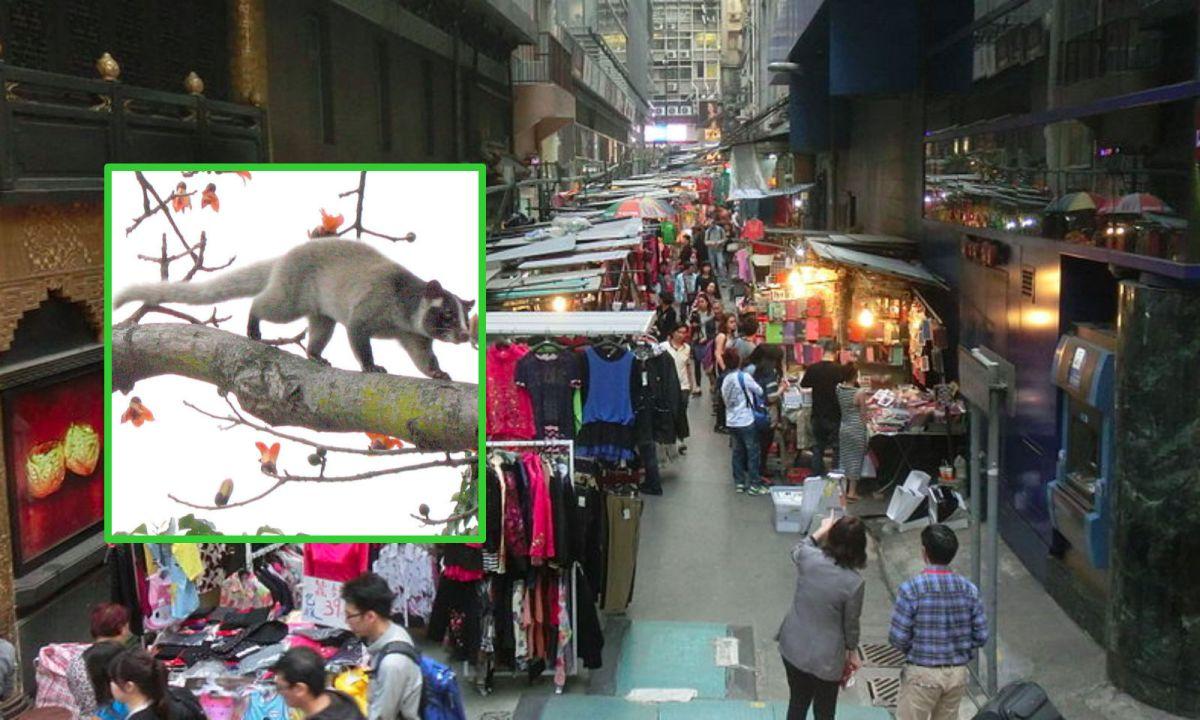 Li Yuen Street East in Central, Hong Kong Island. Photos: Wikipedia, Denise Chan, Iosmjoakinms