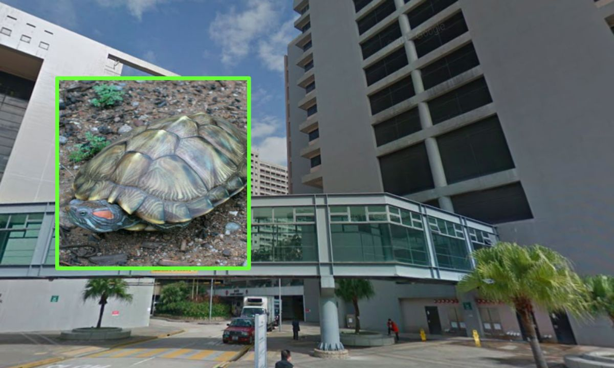 Pamela Youde Nethersole Eastern Hospital, Hong Kong Island; inset shows a red-eared slider. Photos: Google Maps, AFCD