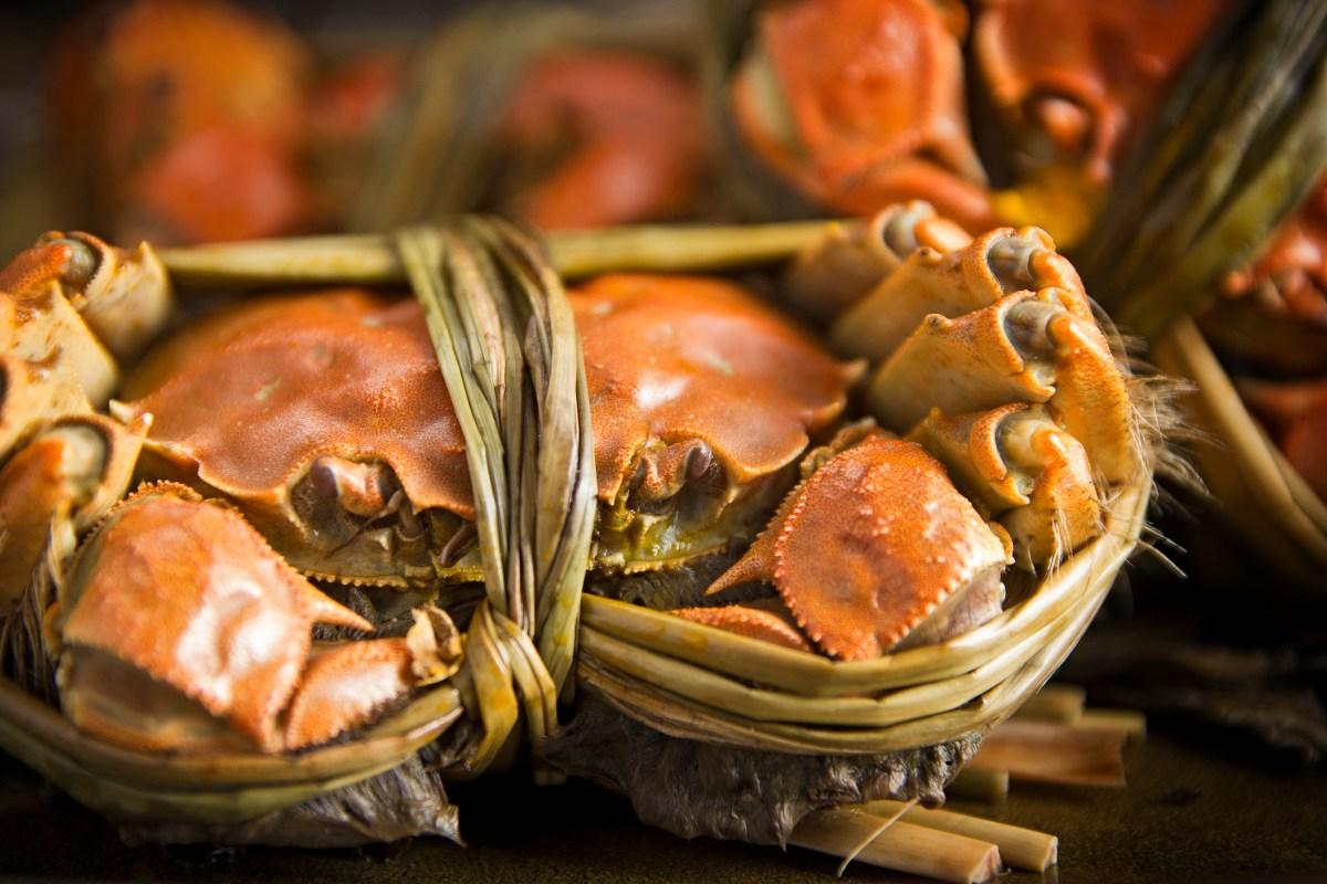 Crabs. Photo: iStock
