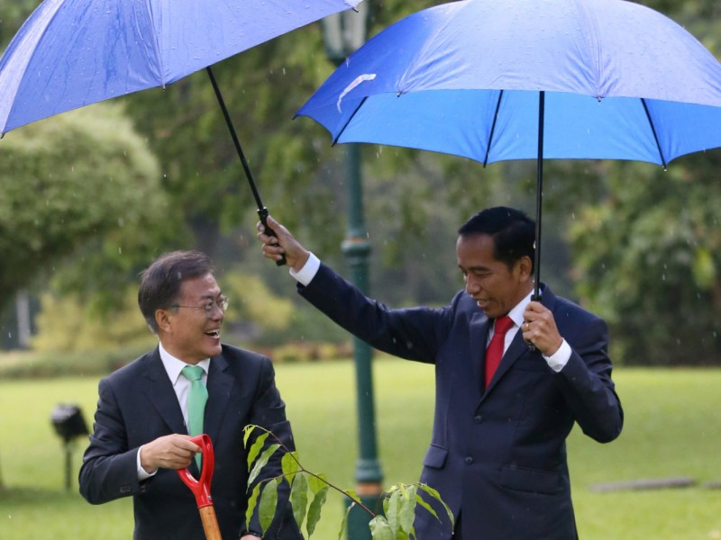 Indonesian President Joko Widodo holds an umbrella for South Korean President Moon Jae-in during a tree planting ceremony at the Indonesian presidential palace on Thursday. Photo: Reuters/Dita Alangkara