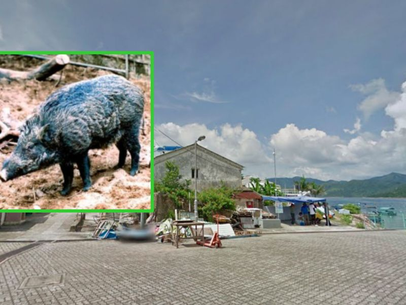 Grass Island in Sai Kung in the New Territories. Photo: Google Maps, AFCD