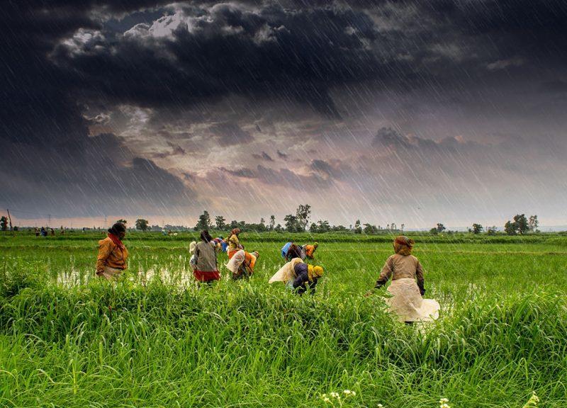 农民在印度季风季节期间在中央邦工作。相片:Wikimedia Commons / Flickr / Rajarshi MIitra