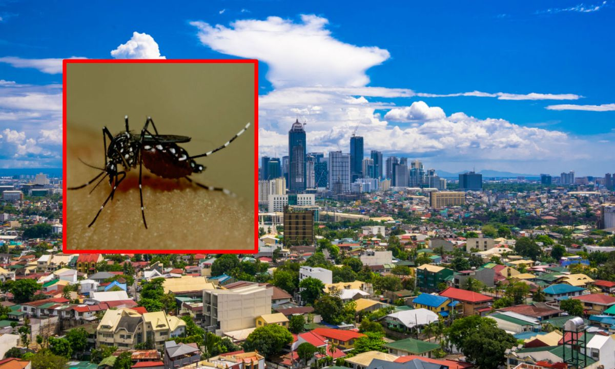 Four dengue fever cases have involved people traveling from the Philippines. A mosquito, inset, which carries the disease. Photos: iStock, Wikimedia Commons