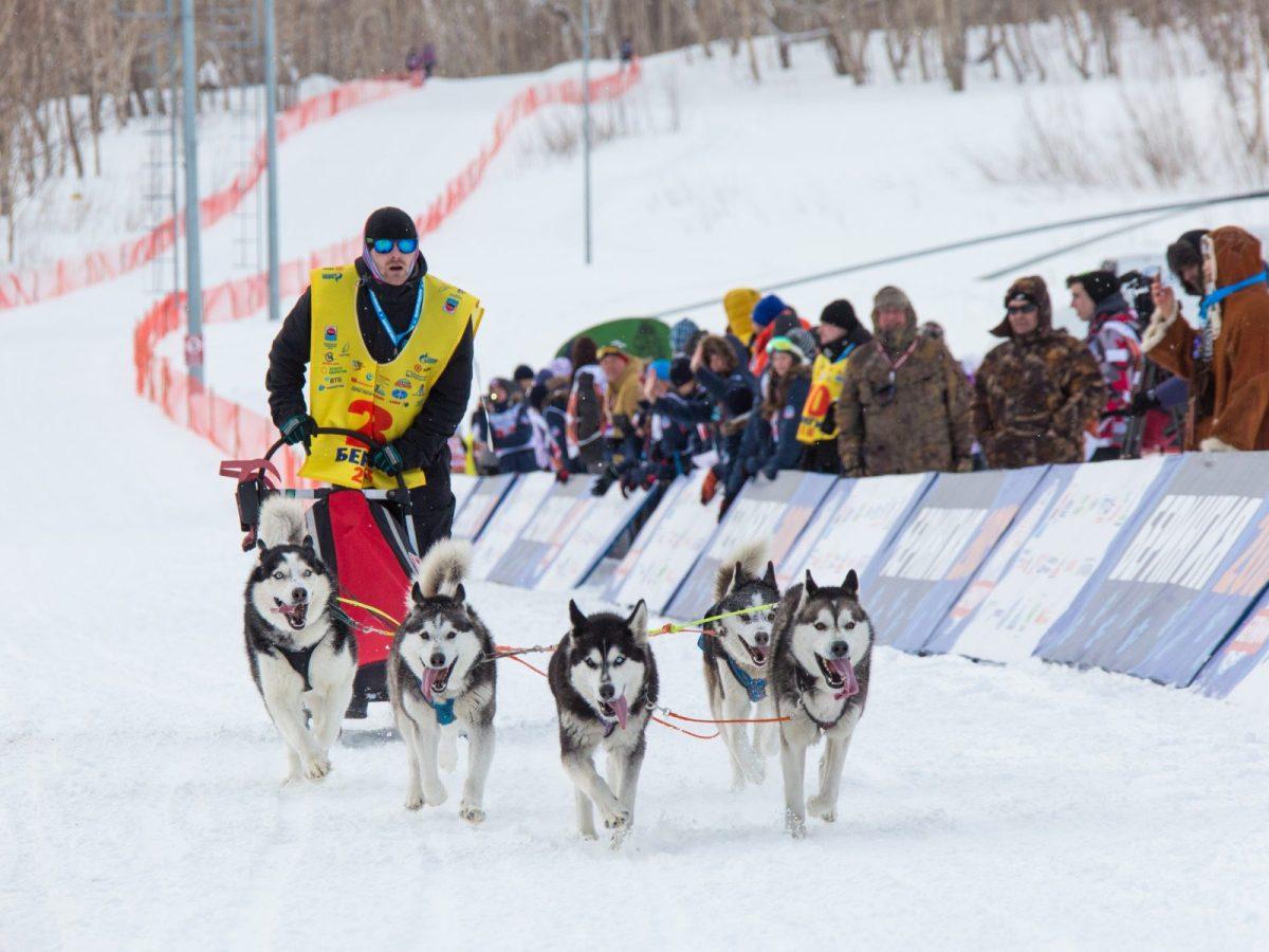 A Beringia contestant and his dogs. Photo: Oleg Belov / NaDV.ru