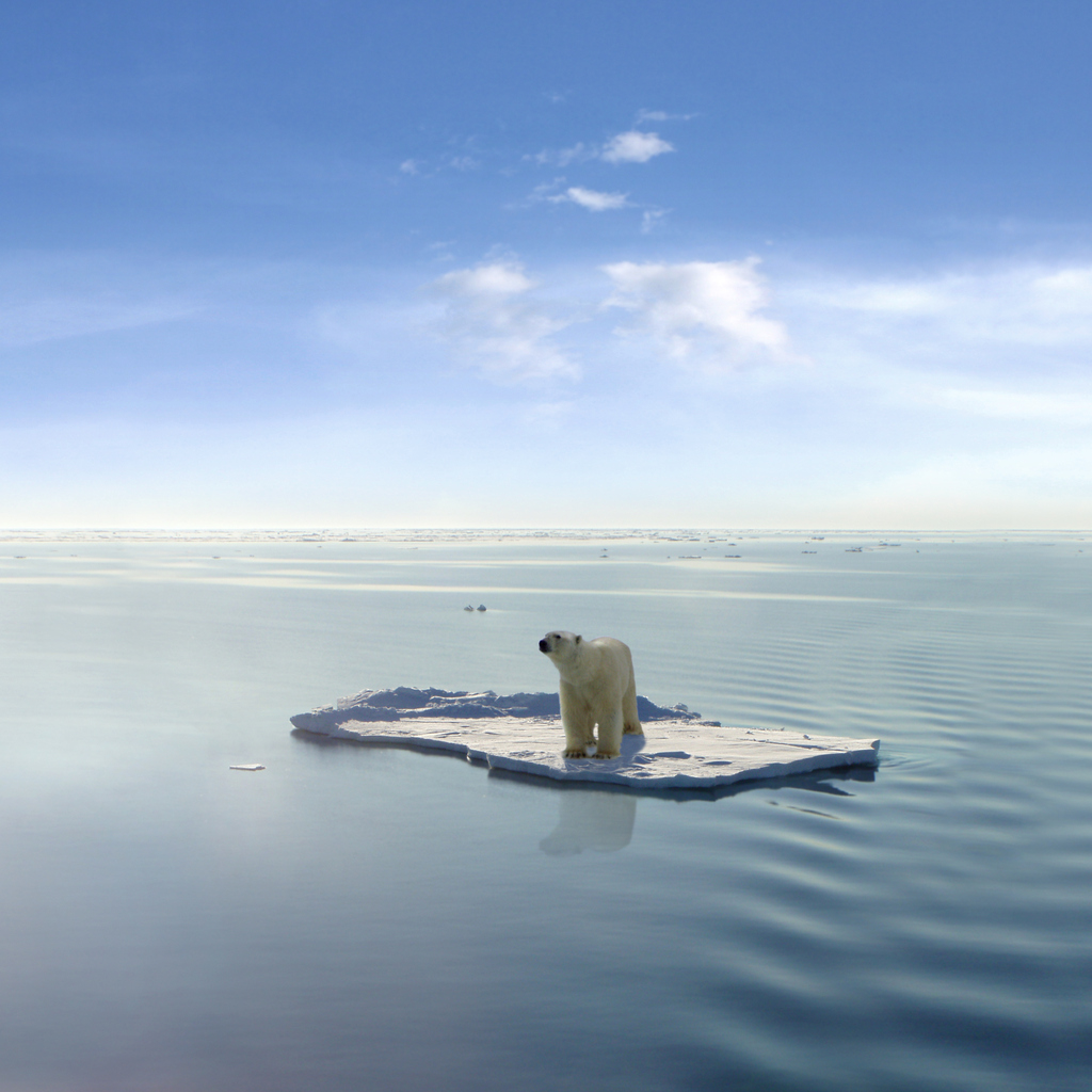 A polar bear managed to get on one of the last ice floes floating in the Arctic sea. Due to global warming the natural environment of the polar bear in the Arctic has changed a lot. The Arctic sea has much less ice than it had some years ago. (This images is a photoshop design. Polarbear, ice floe, ocean and sky are real, they were just not together in the way they are now). Photo: iStock