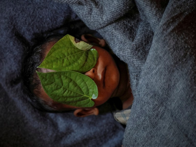 Betel leaves cover the face of 11-month-old Rohingya refugee Abdul Aziz whose wrapped body lay in his family shelter after he died battling high fever and severe cough at the Balukhali refugee camp near Cox's Bazar in Bangladesh on Dec 4, 2017. Photo: Reuters/ Damir Sagolj