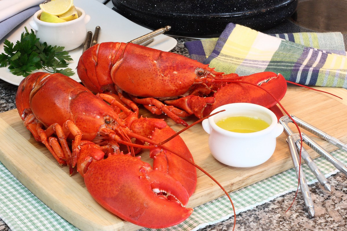 Maine lobsters. Photo: Flickr