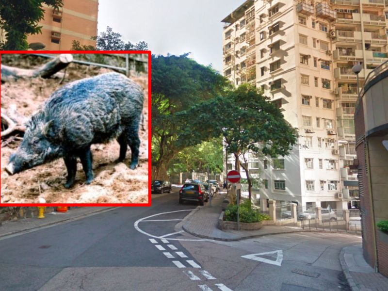 Mid-Levels, Hong Kong Island. Photo: Google Maps