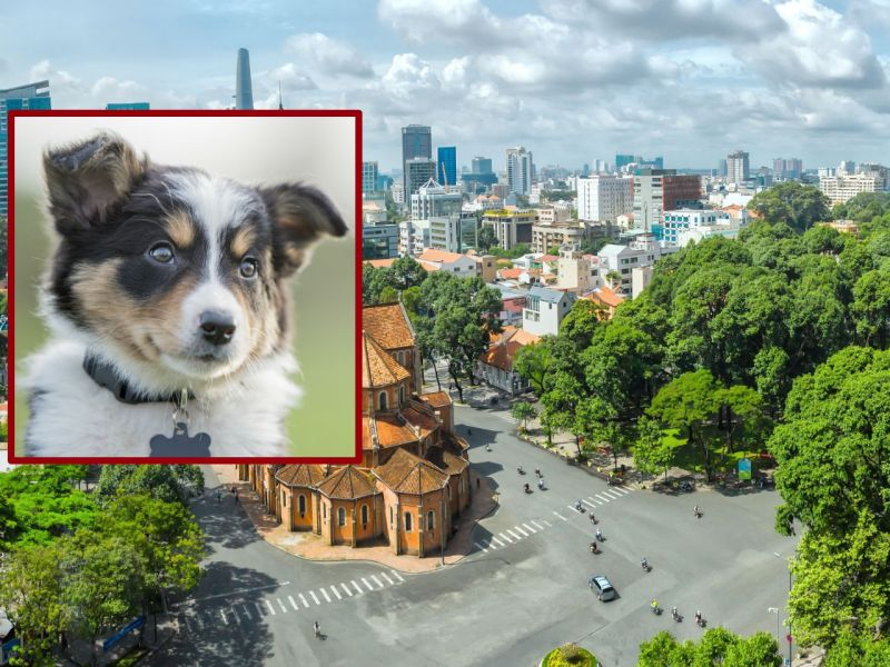 Two Vietnamese men were arrested for stealing and selling nine dogs. Photo: iStock