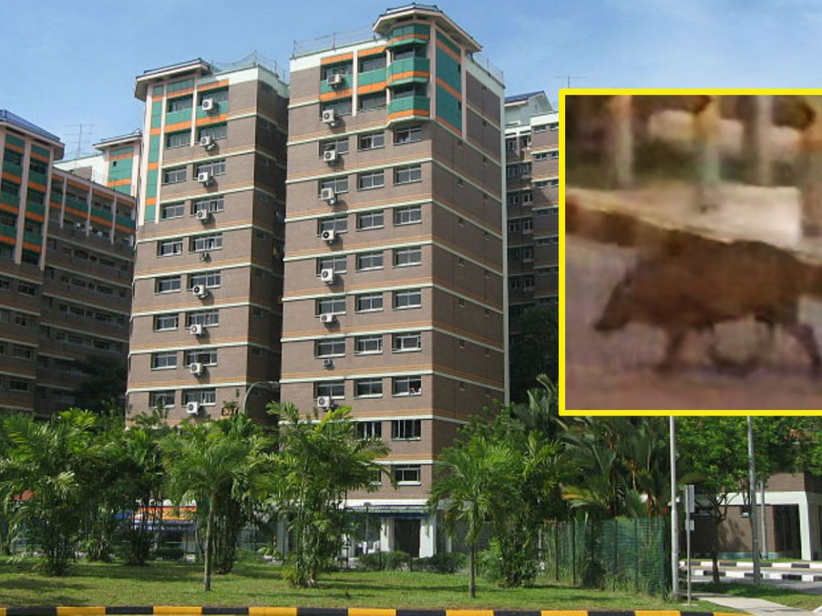 Choa Chu Kang street's HDB estate, where a wild boar took a stroll. Photo: Wikimedia Commons, Terrence Ong