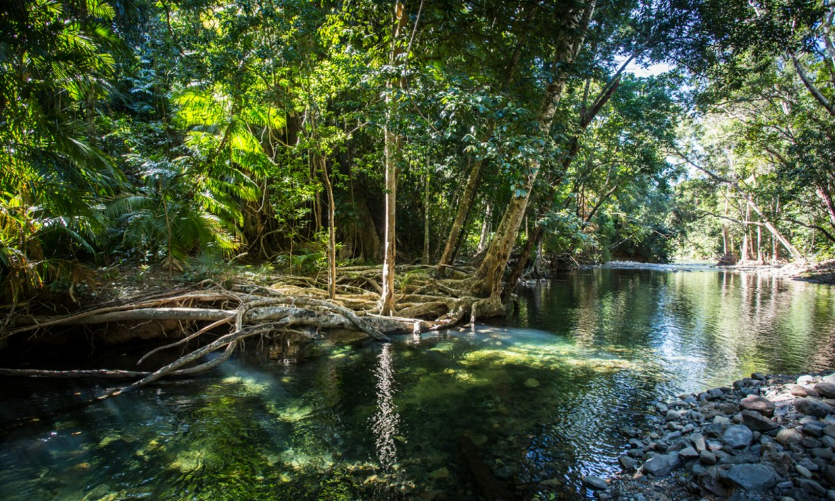The Daintree River in northern Queensland, which is infested with crocodiles. Photo: iStock.