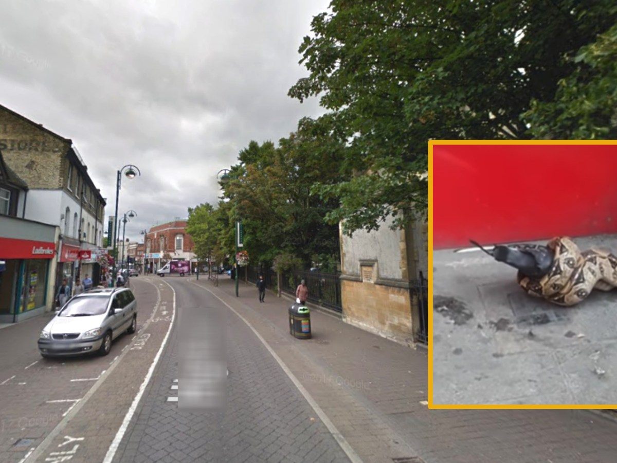 A boa constrictor was seen in Leytonstone in London. Photo: Google Maps, Rachel Garland@YouTube