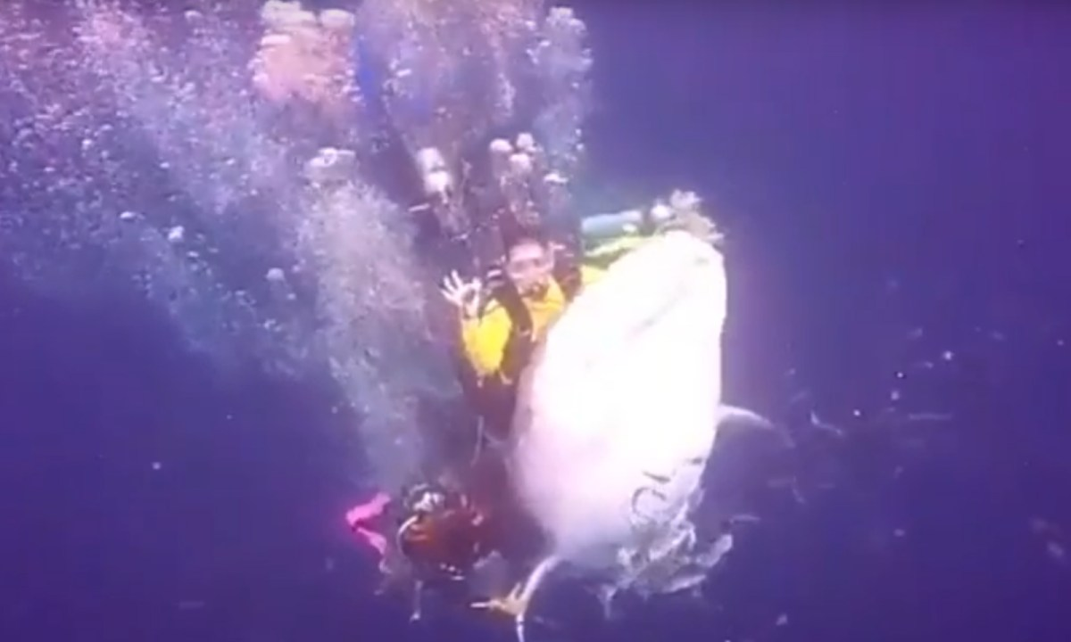 Riding whale sharks is dangerous for both the rider and the fish. Photo captured from Youtube.