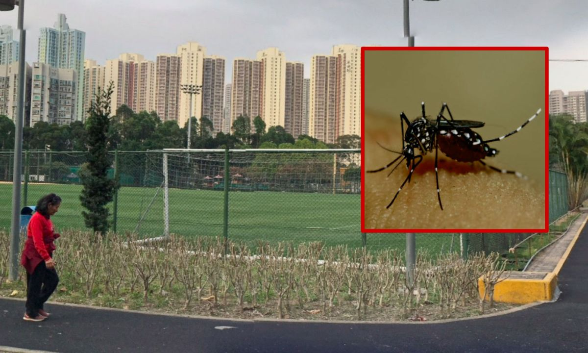 Lam Tin in Kowloon and (inset) a dengue-carrying mosquito. Photo: Google Maps/Wikimedia Commons