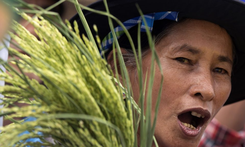 2014年的資料圖片: 泰國農夫進行政治抗議。相片:AFP / Pornchai Kittiwonsakul