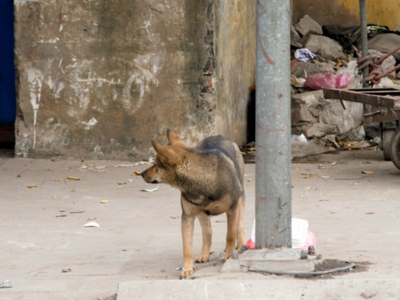 Dogs are not everyone's best friend in Vietnam. Photo by iStock.