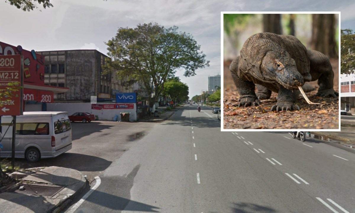 The lizard was found in the Butterworth area. Background: Google Maps. Inset: iStock.